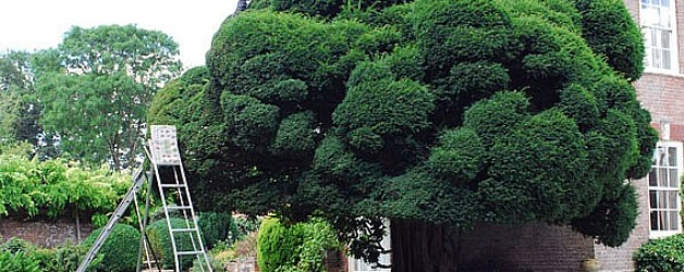 The art of pruning